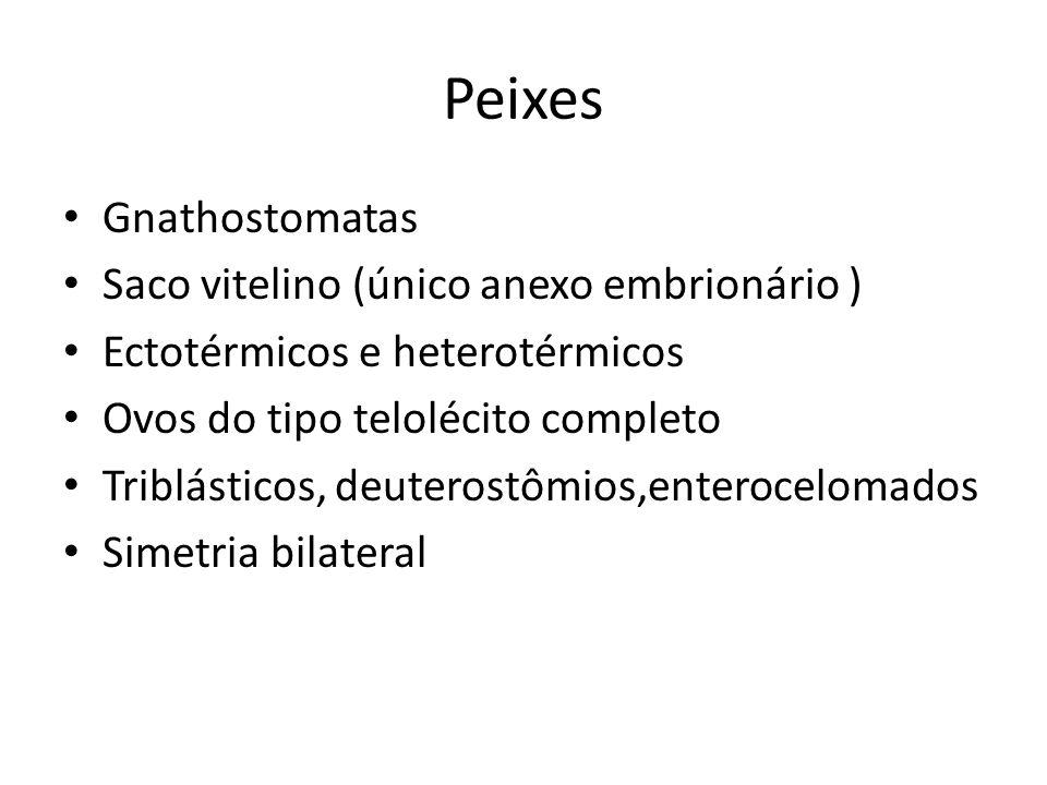 Gnathostomatas Saco vitelino (único anexo embrionário ) Ectotérmicos e heterotérmicos Ovos do tipo telolécito completo Triblásticos, deuterostômios,en
