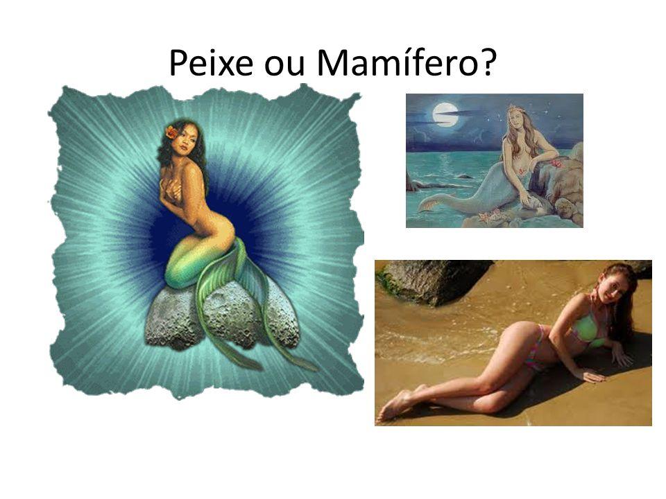 Peixe ou Mamífero?