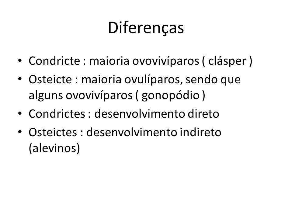 Diferenças Condricte : maioria ovovivíparos ( clásper ) Osteicte : maioria ovulíparos, sendo que alguns ovovivíparos ( gonopódio ) Condrictes : desenv