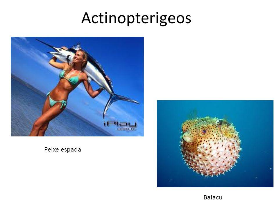 Actinopterigeos Peixe espada Baiacu