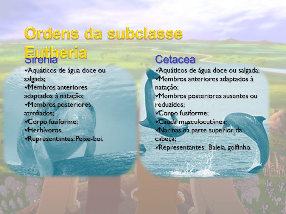 Sirenia Aquáticos de água doce ou salgada; Aquáticos de água doce ou salgada; Membros anteriores adaptados à natação; Membros anteriores adaptados à n