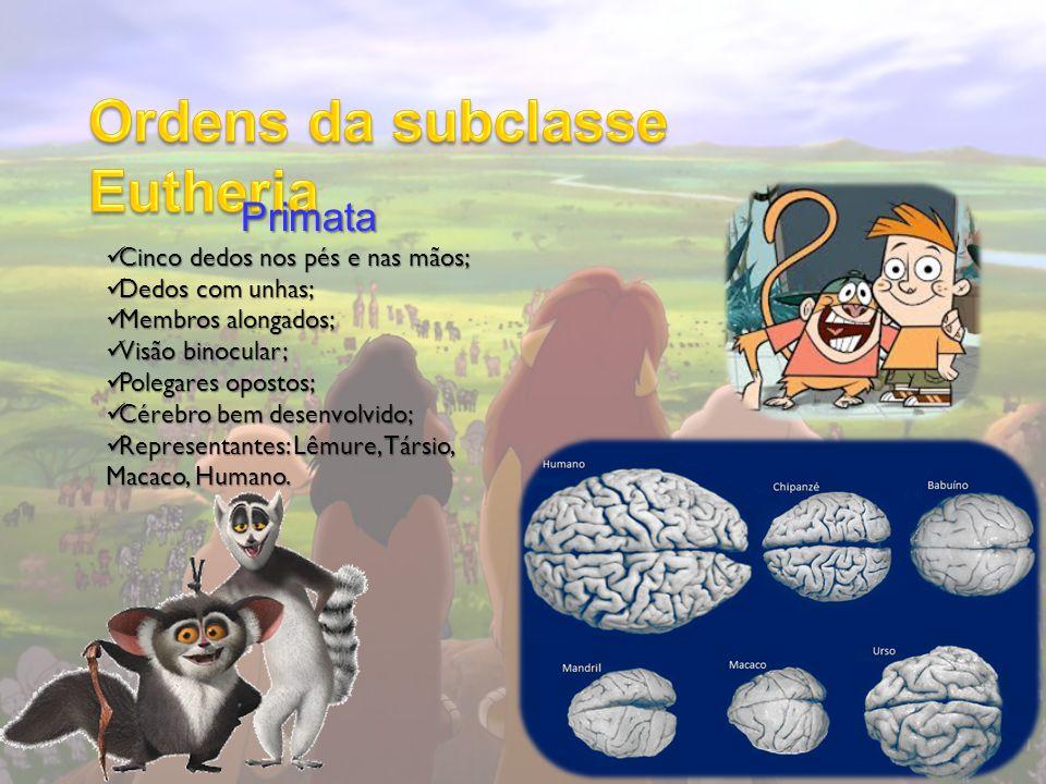 Primata Cinco dedos nos pés e nas mãos; Cinco dedos nos pés e nas mãos; Dedos com unhas; Dedos com unhas; Membros alongados; Membros alongados; Visão