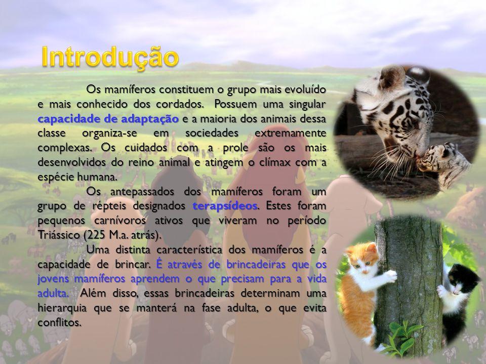 Os mamíferos constituem o grupo mais evoluído e mais conhecido dos cordados. Possuem uma singular capacidade de adaptação e a maioria dos animais dess