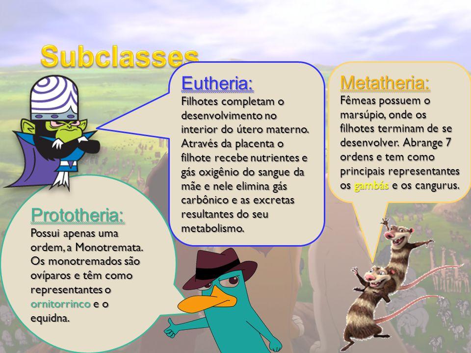 Metatheria: Fêmeas possuem o marsúpio, onde os filhotes terminam de se desenvolver. Abrange 7 ordens e tem como principais representantes os gambás e