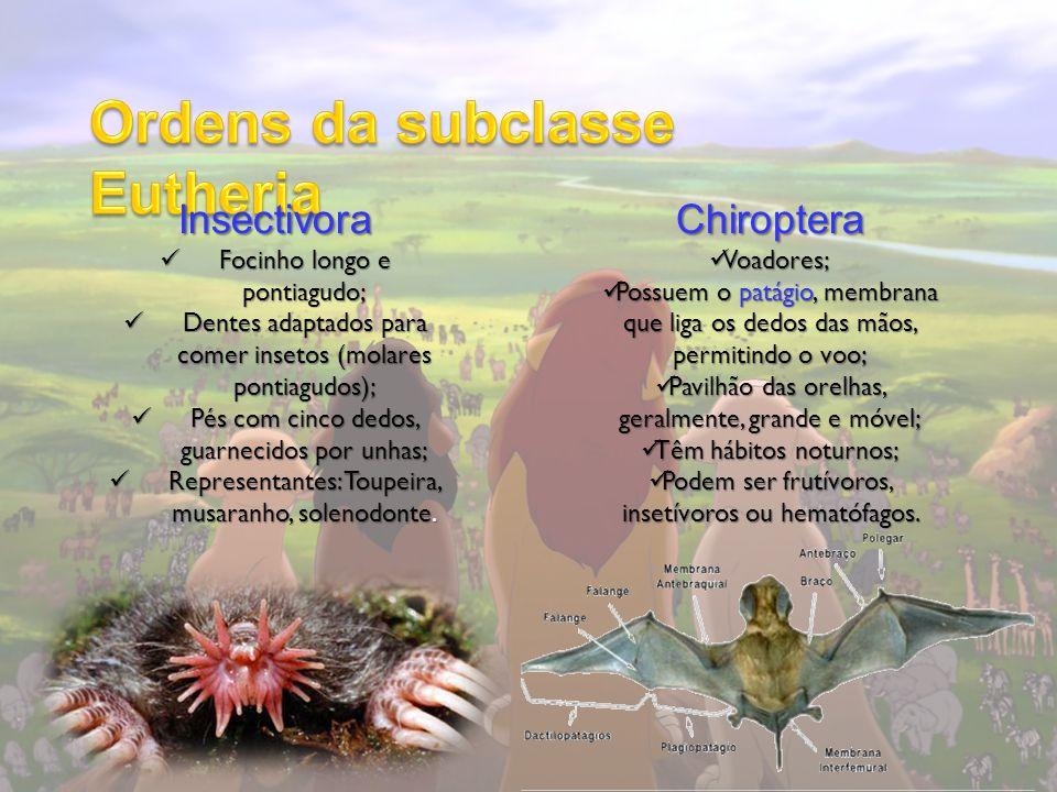 Insectivora Focinho longo e pontiagudo; Focinho longo e pontiagudo; Dentes adaptados para comer insetos (molares pontiagudos); Dentes adaptados para c