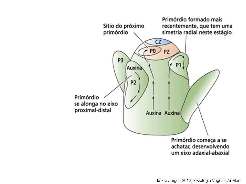 Taiz e Zeiger, 2012, Fisiologia Vegetal, ArtMed