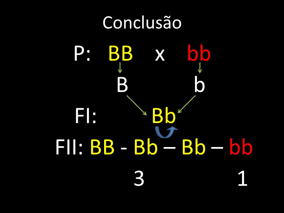 Conclusão P: BB x bb B b FI: Bb FII: BB - Bb – Bb – bb 3 1