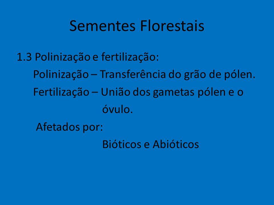Sementes Florestais 1.3 Polinização e fertilização: Polinização – Transferência do grão de pólen. Fertilização – União dos gametas pólen e o óvulo. Af