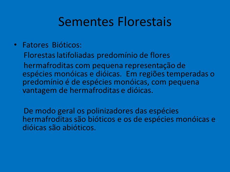Sementes Florestais Fatores Bióticos: Florestas latifoliadas predomínio de flores hermafroditas com pequena representação de espécies monóicas e dióic