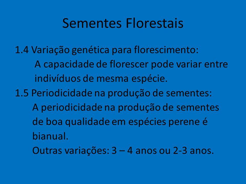 Sementes Florestais 1.4 Variação genética para florescimento: A capacidade de florescer pode variar entre indivíduos de mesma espécie. 1.5 Periodicida
