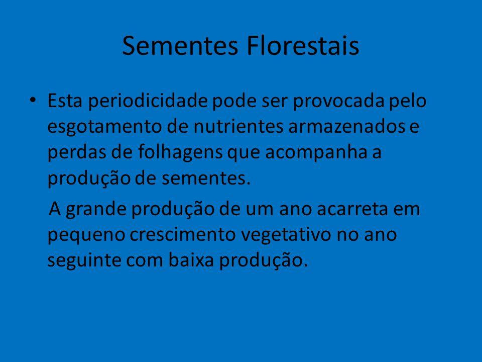 Sementes Florestais Esta periodicidade pode ser provocada pelo esgotamento de nutrientes armazenados e perdas de folhagens que acompanha a produção de