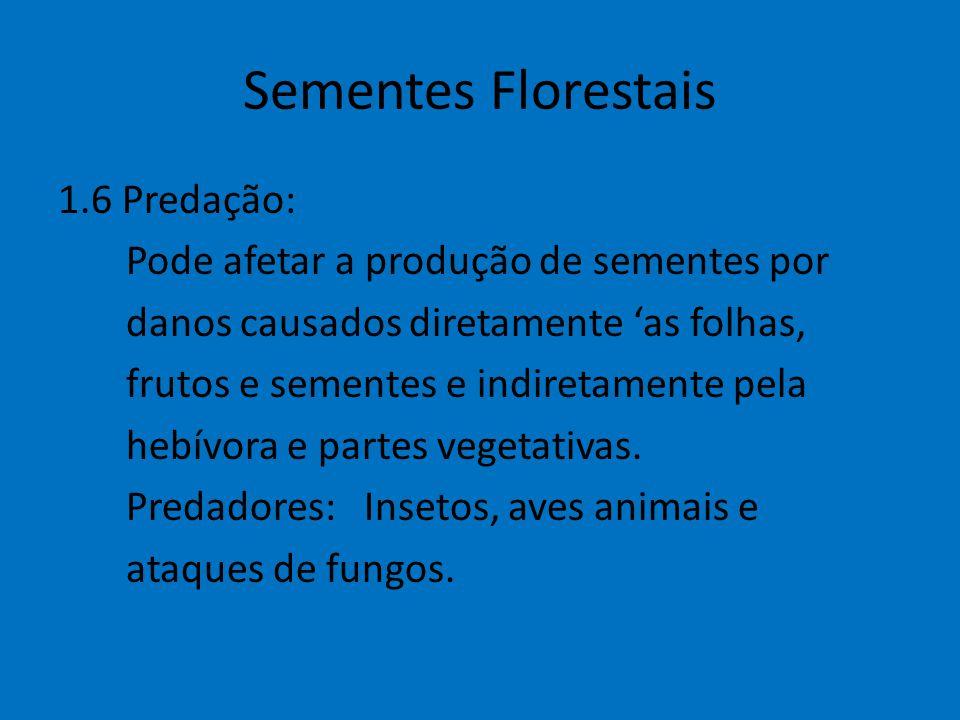 Sementes Florestais 1.6 Predação: Pode afetar a produção de sementes por danos causados diretamente 'as folhas, frutos e sementes e indiretamente pela