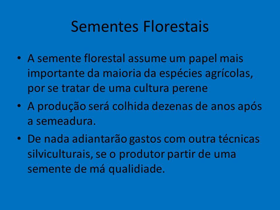 Sementes Florestais A semente florestal assume um papel mais importante da maioria da espécies agrícolas, por se tratar de uma cultura perene A produç