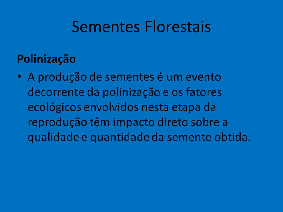 Sementes Florestais Polinização A produção de sementes é um evento decorrente da polinização e os fatores ecológicos envolvidos nesta etapa da reprodu