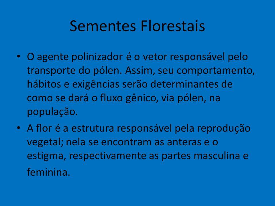 Sementes Florestais O agente polinizador é o vetor responsável pelo transporte do pólen. Assim, seu comportamento, hábitos e exigências serão determin