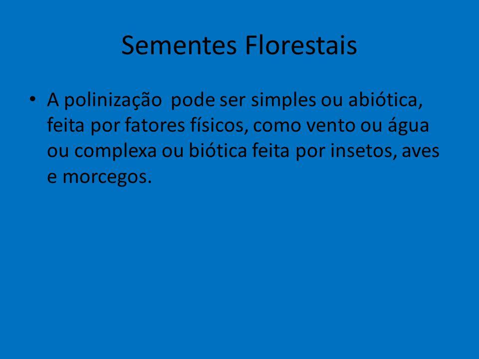 Sementes Florestais A polinização pode ser simples ou abiótica, feita por fatores físicos, como vento ou água ou complexa ou biótica feita por insetos