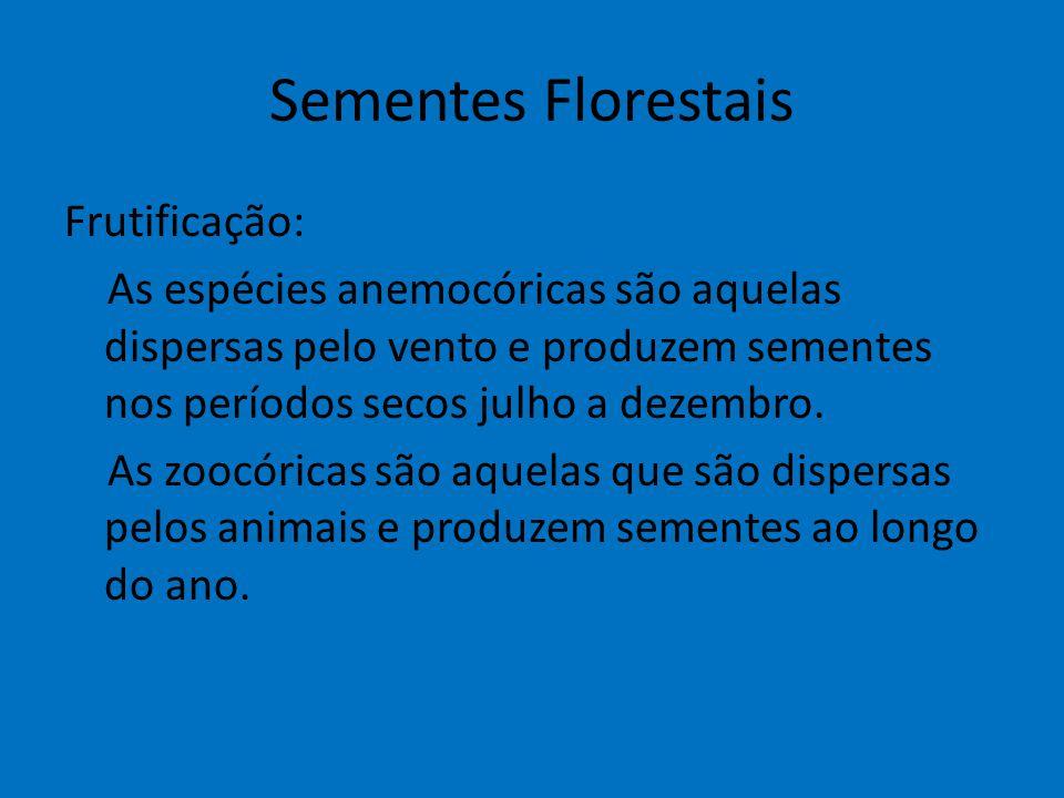 Sementes Florestais Frutificação: As espécies anemocóricas são aquelas dispersas pelo vento e produzem sementes nos períodos secos julho a dezembro. A