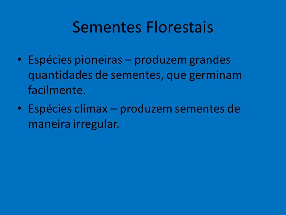 Sementes Florestais Espécies pioneiras – produzem grandes quantidades de sementes, que germinam facilmente. Espécies clímax – produzem sementes de man