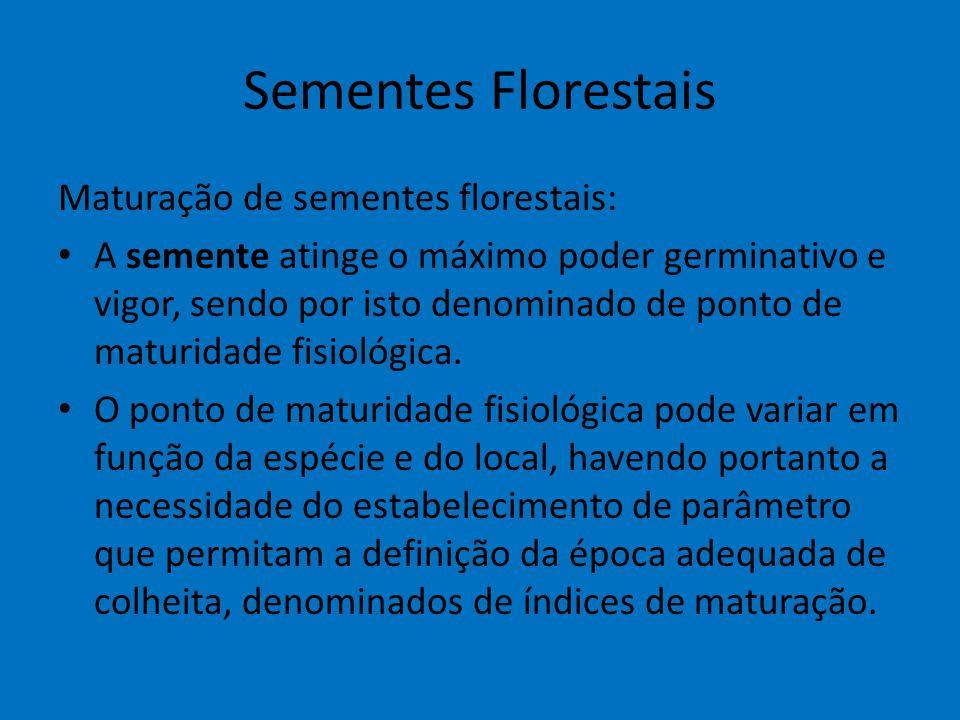 Sementes Florestais Maturação de sementes florestais: A semente atinge o máximo poder germinativo e vigor, sendo por isto denominado de ponto de matur