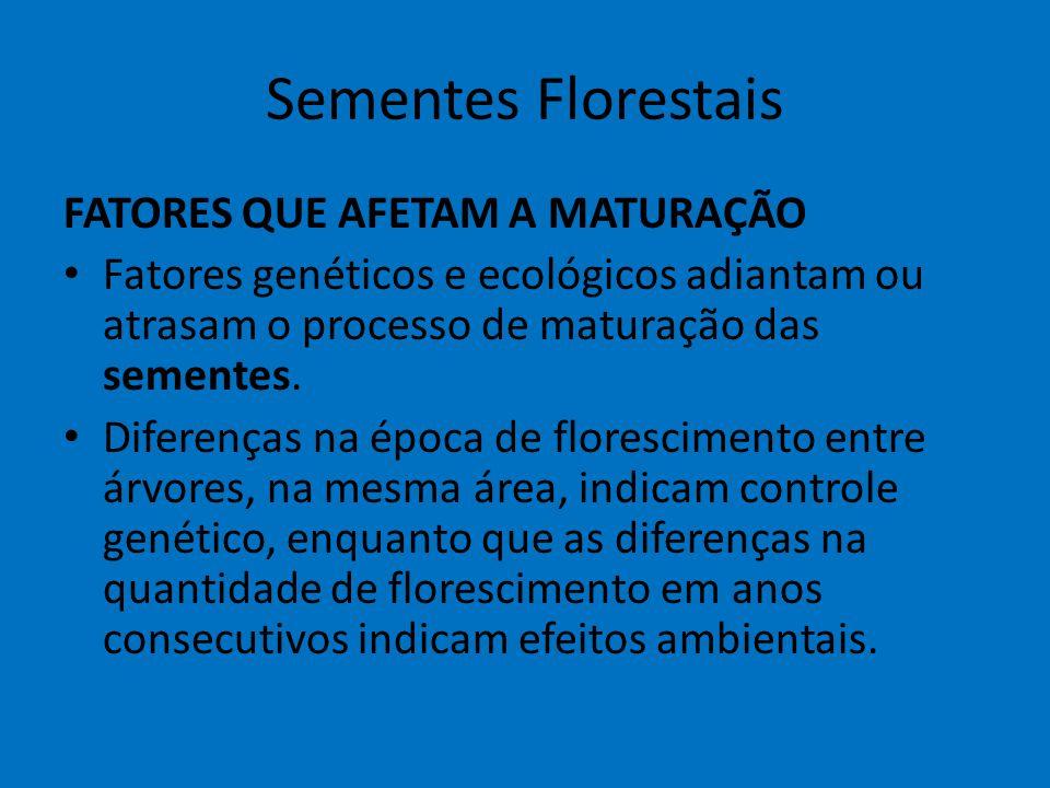 Sementes Florestais FATORES QUE AFETAM A MATURAÇÃO Fatores genéticos e ecológicos adiantam ou atrasam o processo de maturação das sementes. Diferenças