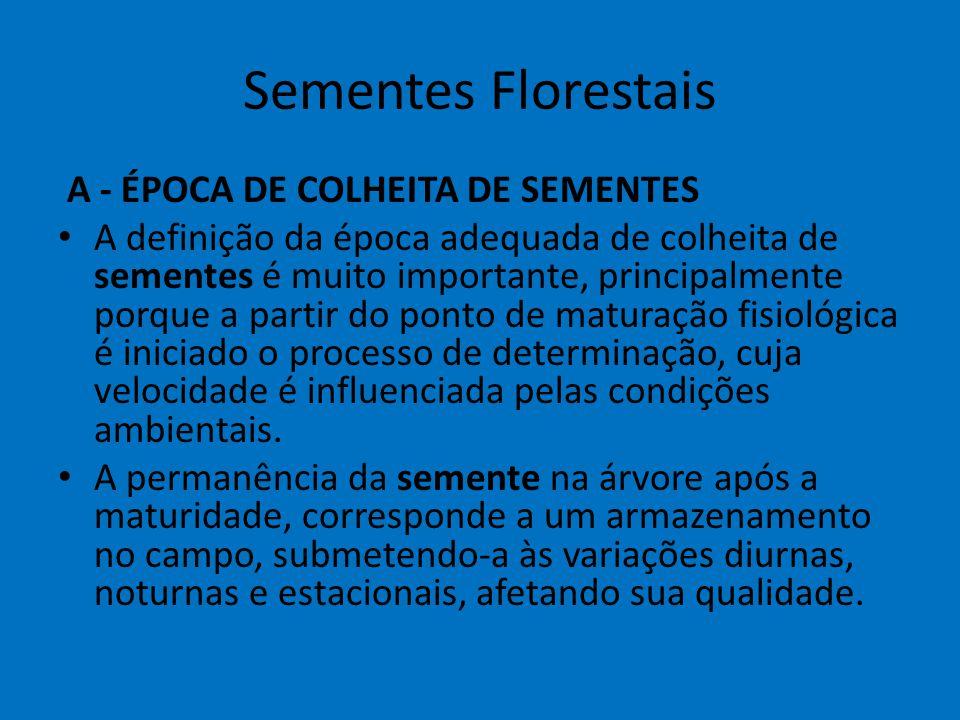 Sementes Florestais A - ÉPOCA DE COLHEITA DE SEMENTES A definição da época adequada de colheita de sementes é muito importante, principalmente porque