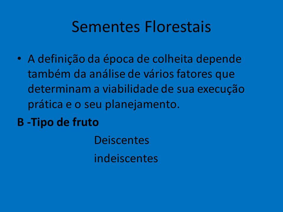 Sementes Florestais A definição da época de colheita depende também da análise de vários fatores que determinam a viabilidade de sua execução prática