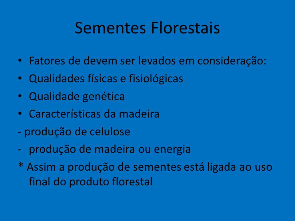 Sementes Florestais Fatores de devem ser levados em consideração: Qualidades físicas e fisiológicas Qualidade genética Características da madeira - pr