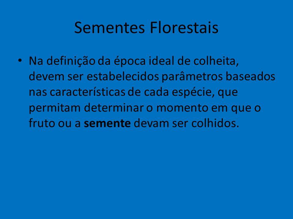 Sementes Florestais Na definição da época ideal de colheita, devem ser estabelecidos parâmetros baseados nas características de cada espécie, que perm