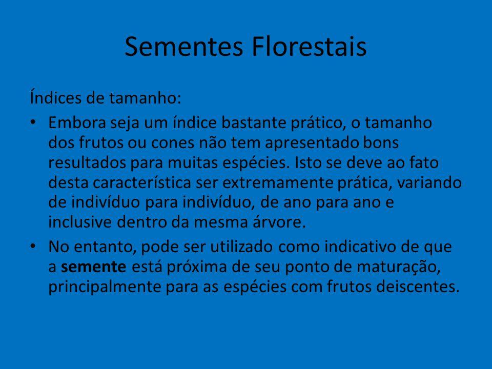 Sementes Florestais Índices de tamanho: Embora seja um índice bastante prático, o tamanho dos frutos ou cones não tem apresentado bons resultados para
