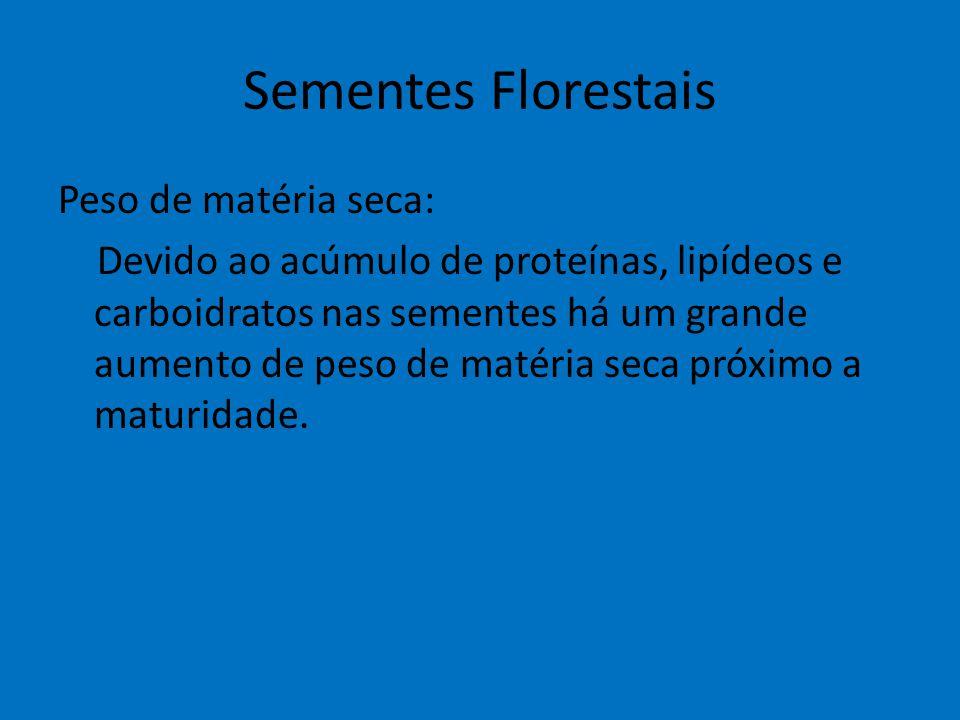 Sementes Florestais Peso de matéria seca: Devido ao acúmulo de proteínas, lipídeos e carboidratos nas sementes há um grande aumento de peso de matéria