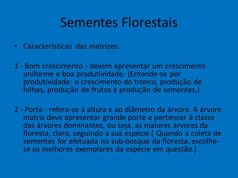 Sementes Florestais Características das matrizes: 1 - Bom crescimento - devem apresentar um crescimento uniforme e boa produtividade. (Entende-se por