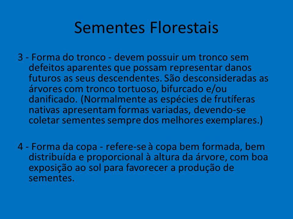 Sementes Florestais 3 - Forma do tronco - devem possuir um tronco sem defeitos aparentes que possam representar danos futuros as seus descendentes. Sã