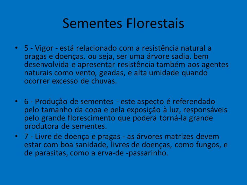 Sementes Florestais 5 - Vigor - está relacionado com a resistência natural a pragas e doenças, ou seja, ser uma árvore sadia, bem desenvolvida e apres