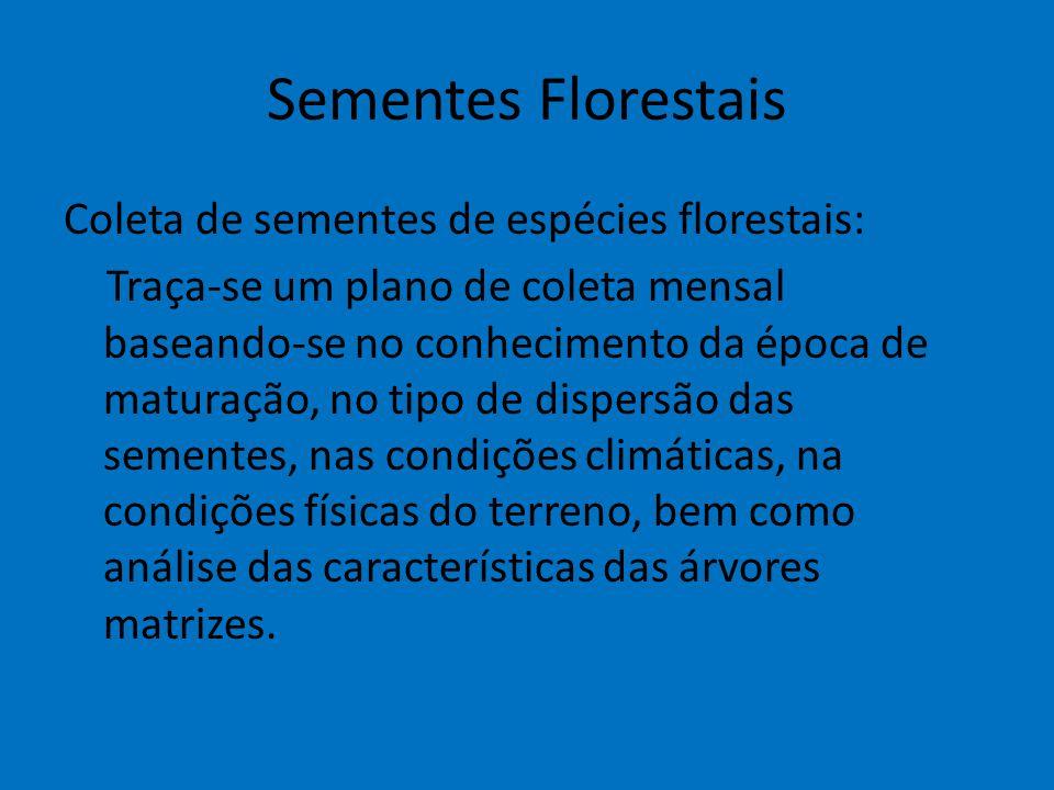 Sementes Florestais Coleta de sementes de espécies florestais: Traça-se um plano de coleta mensal baseando-se no conhecimento da época de maturação, n