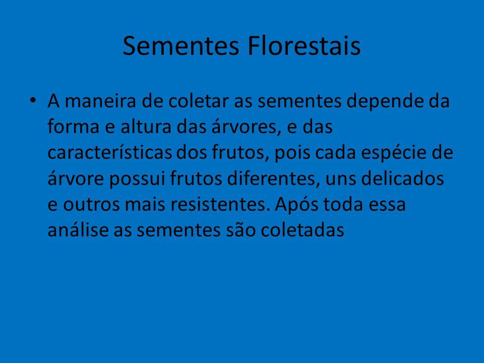 Sementes Florestais A maneira de coletar as sementes depende da forma e altura das árvores, e das características dos frutos, pois cada espécie de árv