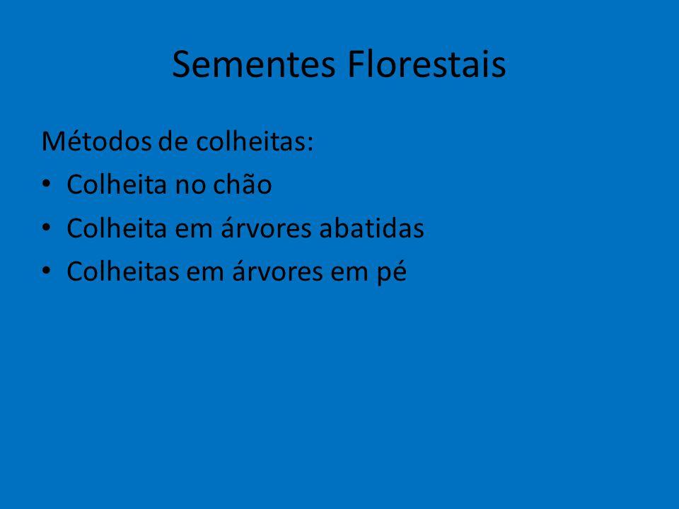 Sementes Florestais Métodos de colheitas: Colheita no chão Colheita em árvores abatidas Colheitas em árvores em pé