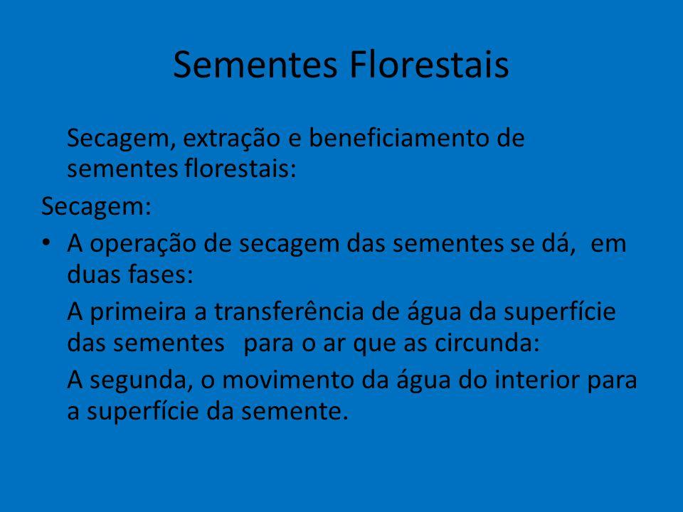 Sementes Florestais Secagem, extração e beneficiamento de sementes florestais: Secagem: A operação de secagem das sementes se dá, em duas fases: A pri