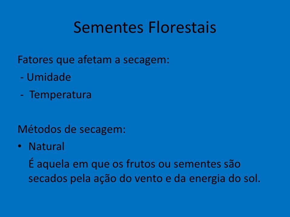 Sementes Florestais Fatores que afetam a secagem: - Umidade - Temperatura Métodos de secagem: Natural É aquela em que os frutos ou sementes são secado