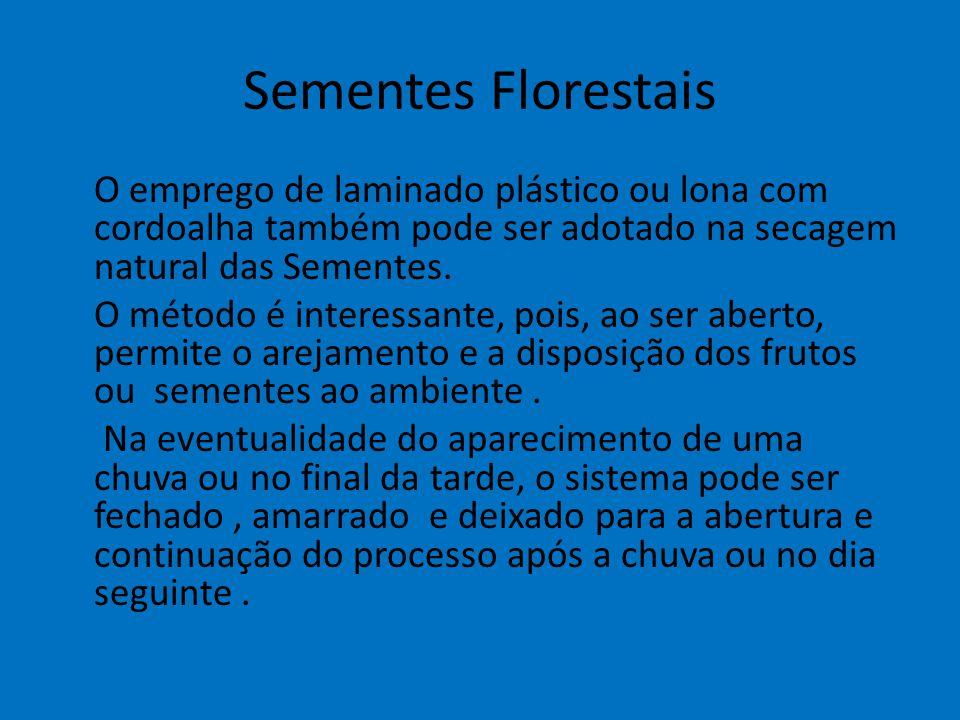 Sementes Florestais O emprego de laminado plástico ou lona com cordoalha também pode ser adotado na secagem natural das Sementes. O método é interessa