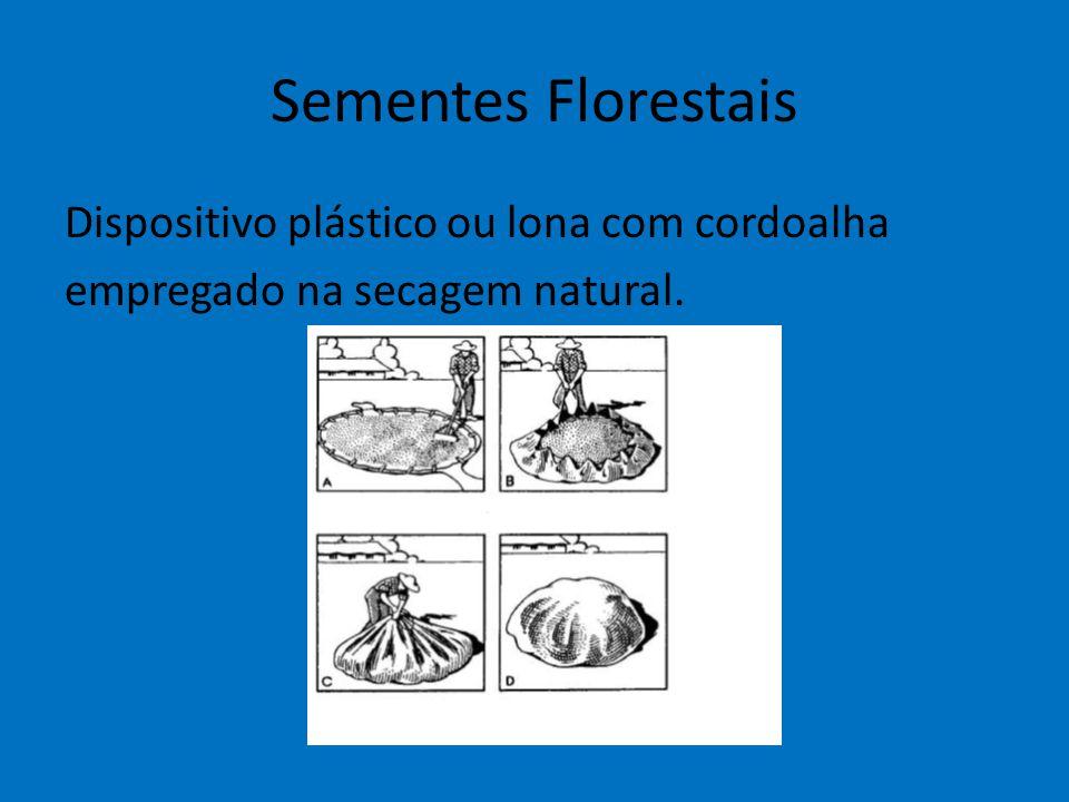 Sementes Florestais Dispositivo plástico ou lona com cordoalha empregado na secagem natural.