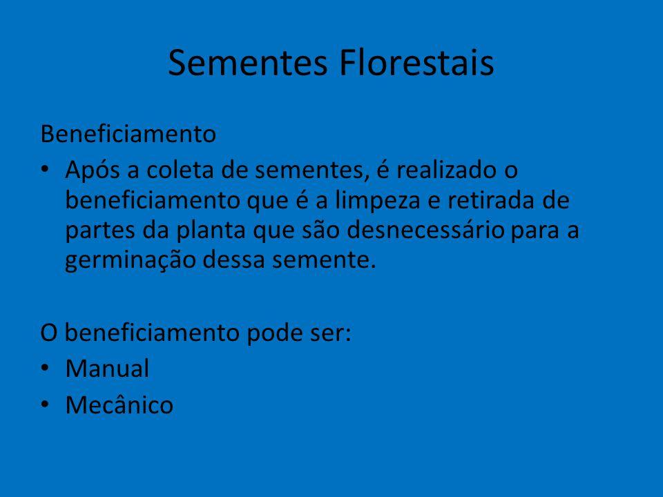 Sementes Florestais Beneficiamento Após a coleta de sementes, é realizado o beneficiamento que é a limpeza e retirada de partes da planta que são desn