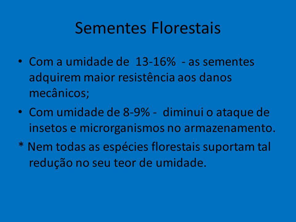 Sementes Florestais Com a umidade de 13-16% - as sementes adquirem maior resistência aos danos mecânicos; Com umidade de 8-9% - diminui o ataque de in
