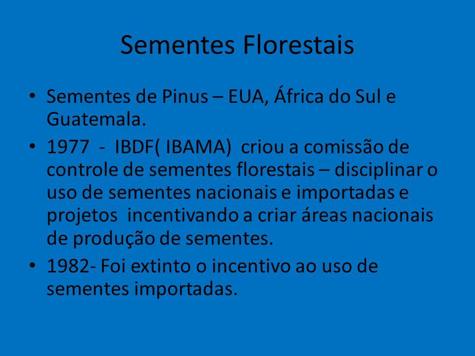Sementes Florestais Sementes de Pinus – EUA, África do Sul e Guatemala. 1977 - IBDF( IBAMA) criou a comissão de controle de sementes florestais – disc