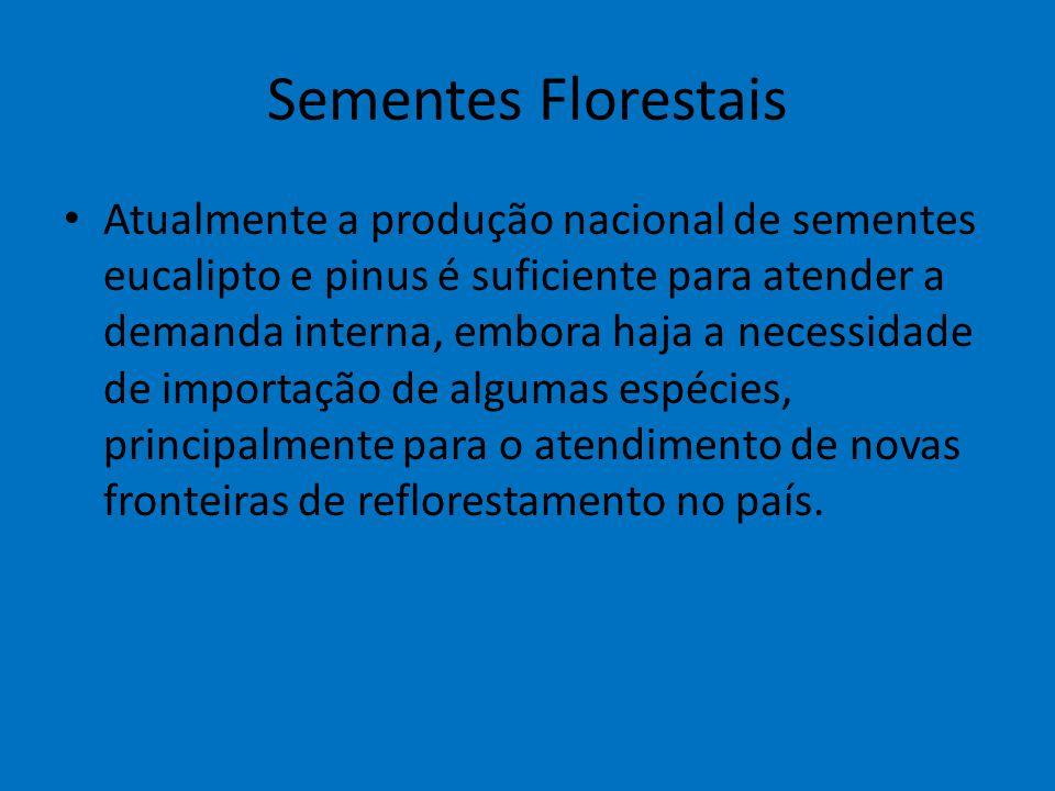 Sementes Florestais Atualmente a produção nacional de sementes eucalipto e pinus é suficiente para atender a demanda interna, embora haja a necessidad