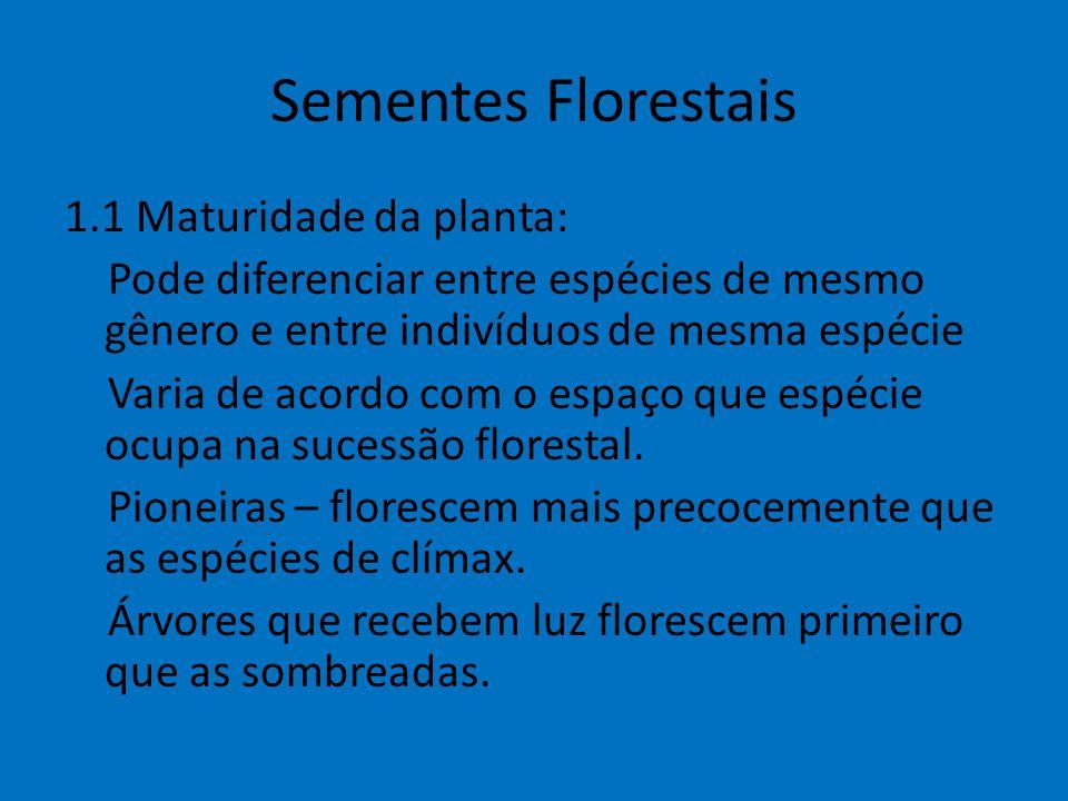 Sementes Florestais 1.1 Maturidade da planta: Pode diferenciar entre espécies de mesmo gênero e entre indivíduos de mesma espécie Varia de acordo com