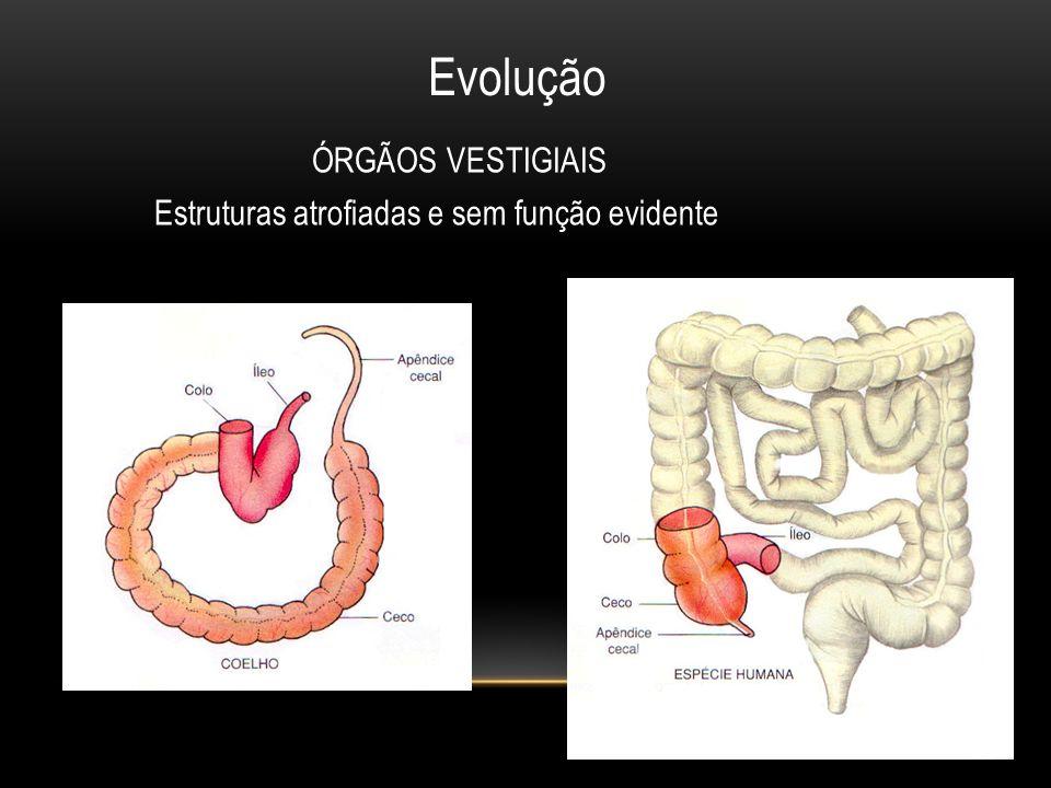 Mecanismos de isolamento reprodutivo 1.
