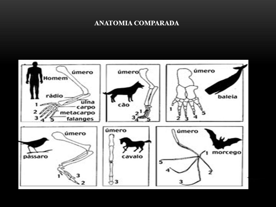 Adaptações evolutivas – São transformações involuntárias em uma espécie, que resultam numa melhor adequação morfológica, fisiológica, etc., para sobreviver numa dada região.