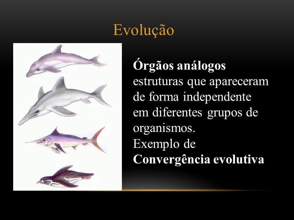 Órgãos análogos estruturas que apareceram de forma independente em diferentes grupos de organismos. Exemplo de Convergência evolutiva Evolução