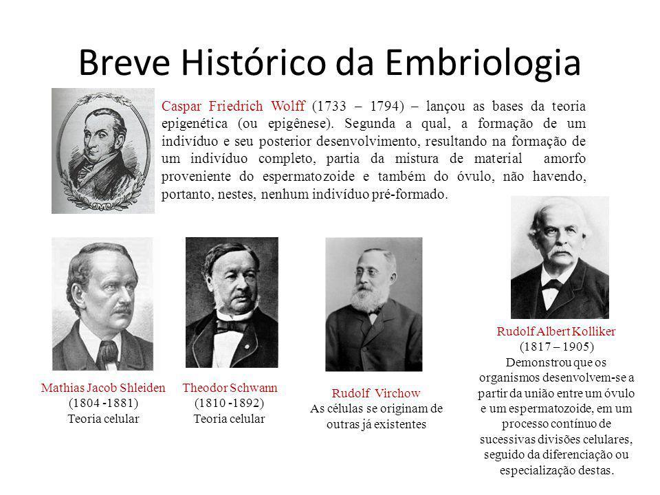 Breve Histórico da Embriologia Caspar Friedrich Wolff (1733 – 1794) – lançou as bases da teoria epigenética (ou epigênese).