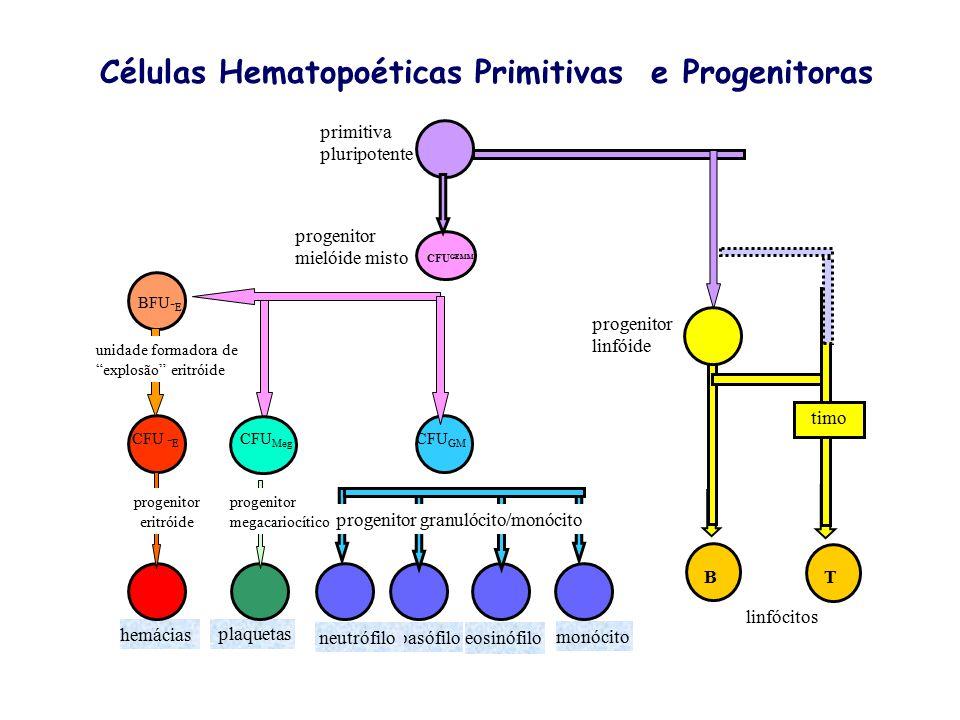 Células Pluripotenciais